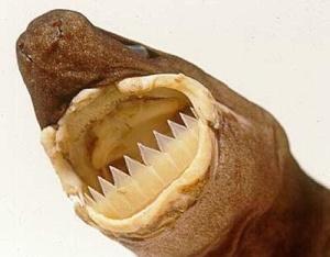 Foto: sharkdivers.blogspot.se